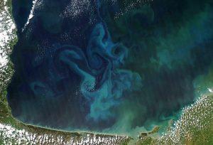 50 à 80% de la production d'oxygène sur Terre provient de l'océan